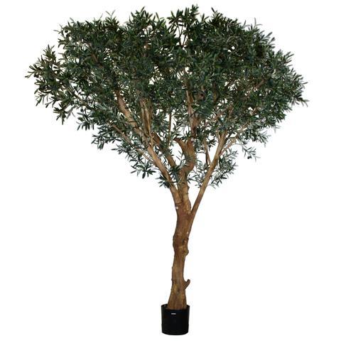 TSP 4144- Olive Tree