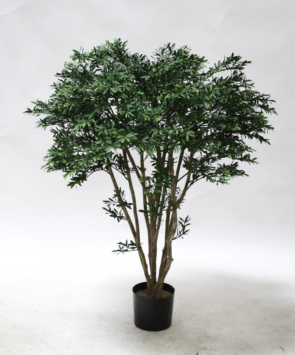 TSP 1776- Black Willow