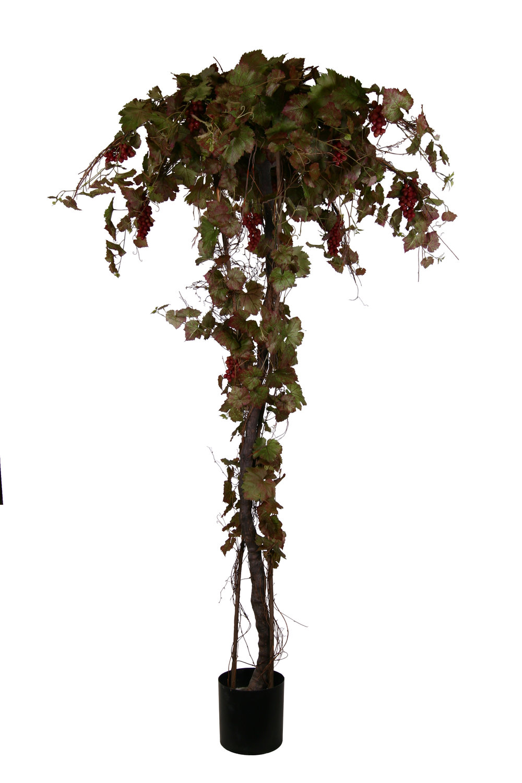 TSP 4095- Chillean Grape leaf