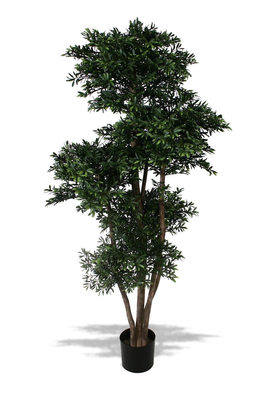 TPT 4004- Black Willow