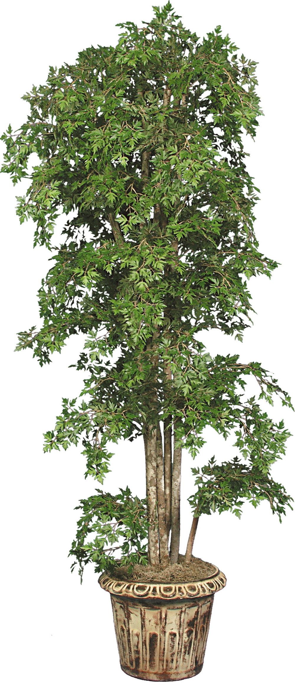 TPT 1368- Aralia Tree