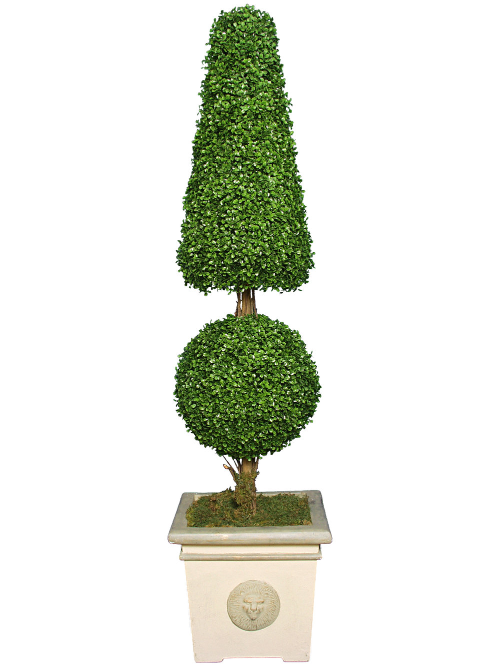 TSP 1167- Boxwood Cone & Ball Topiary