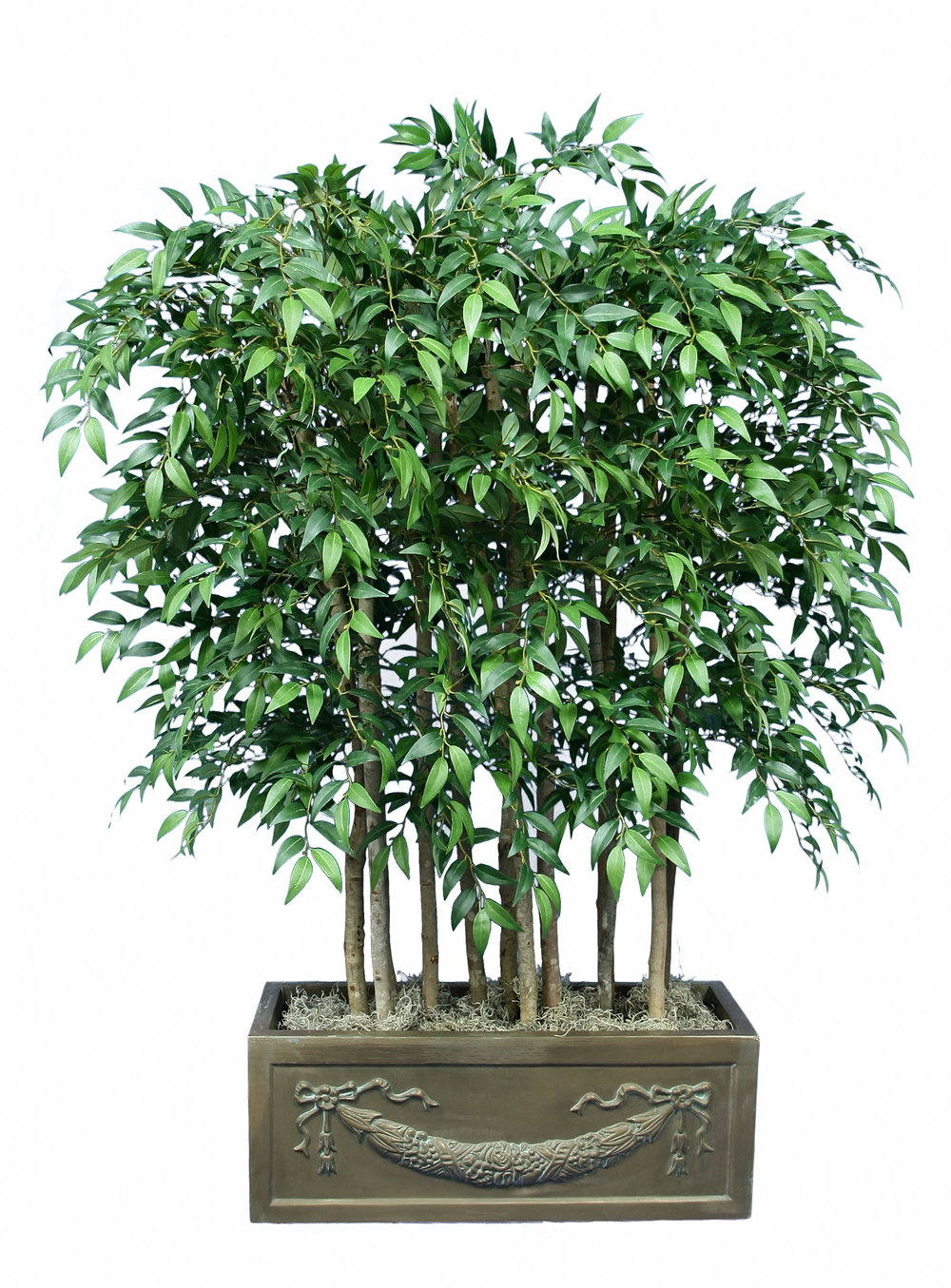 TCM 4656- Smilax Panel tree