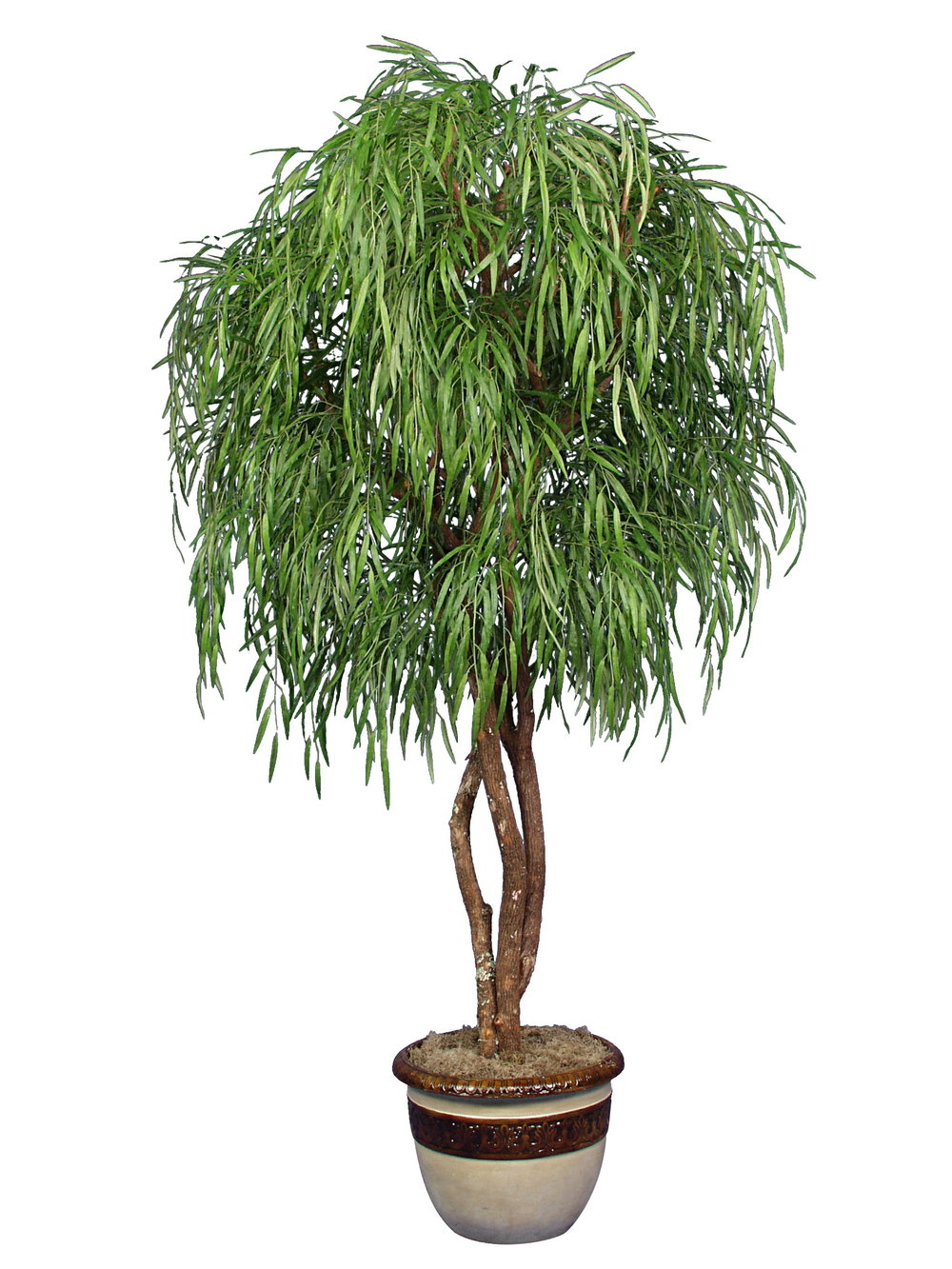 TSP 1482- Weeping Willow