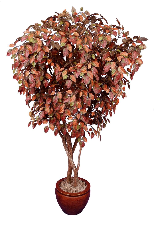 TSP 5684- Chestnut Tree