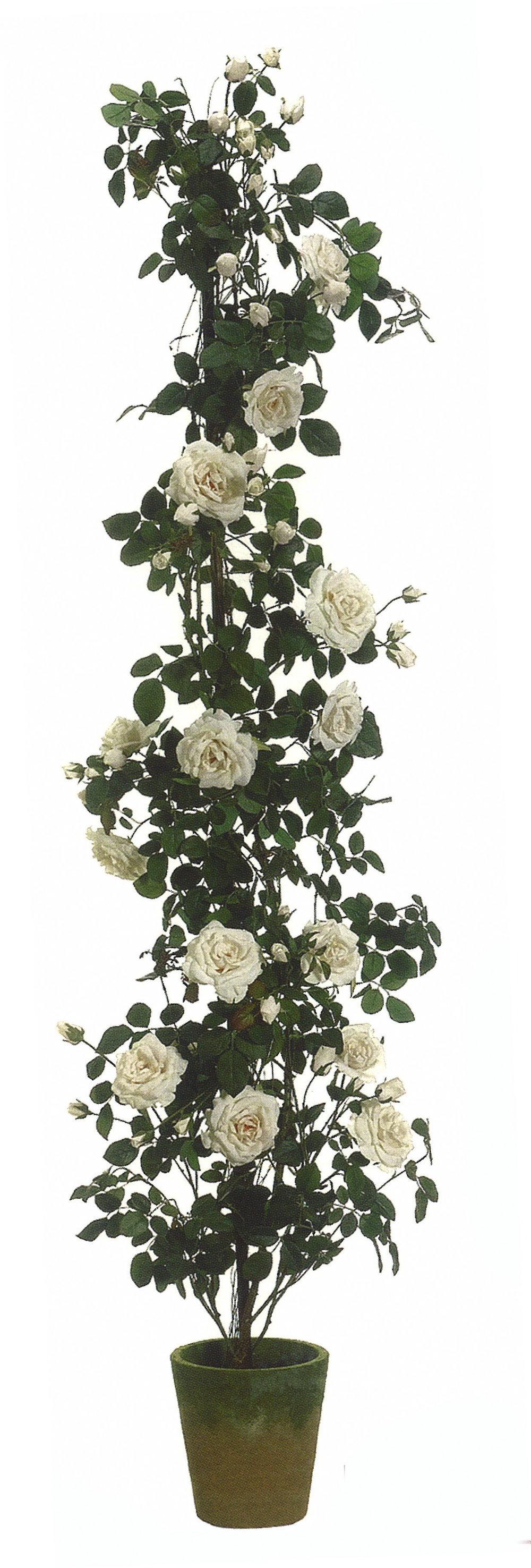 TSP 3121- Climbing Rose tree