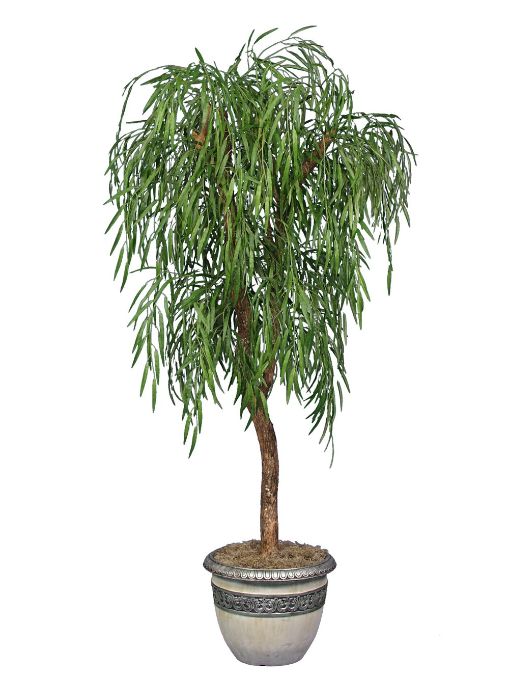 TSP 1423- Weeping Willow