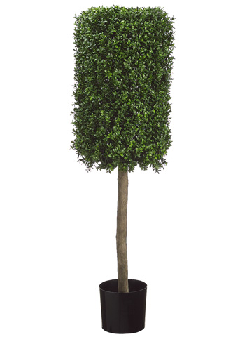 Conical Boxwood hedge