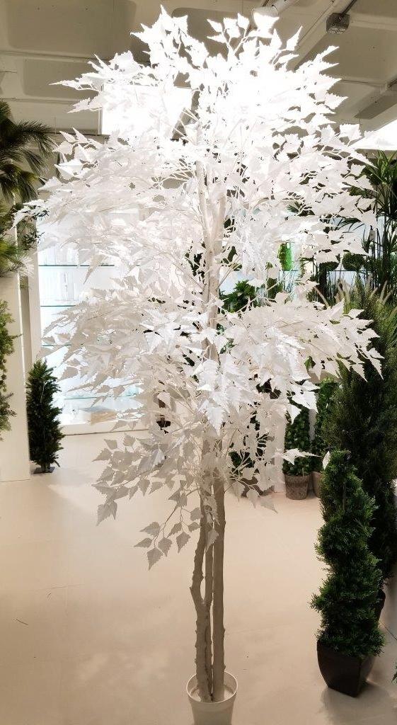 TSP 5810- Ficus