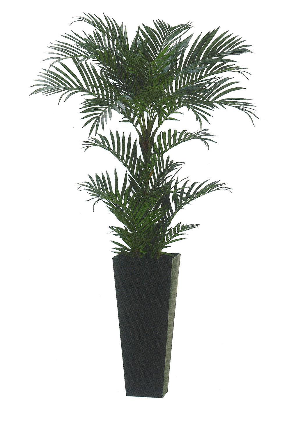 Areca Palm garden