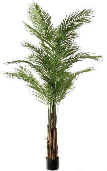 Areca Palm (PE)