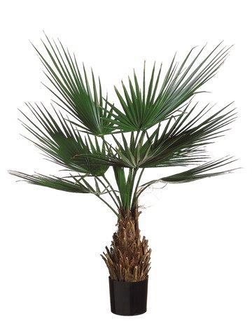 Palmetto Plant
