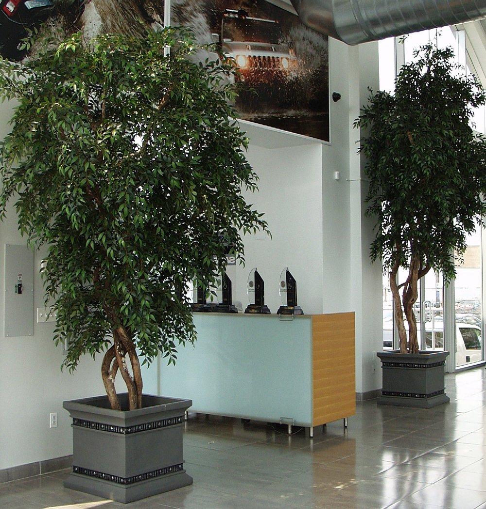 Trees from Citi Cad & Hummr.jpg