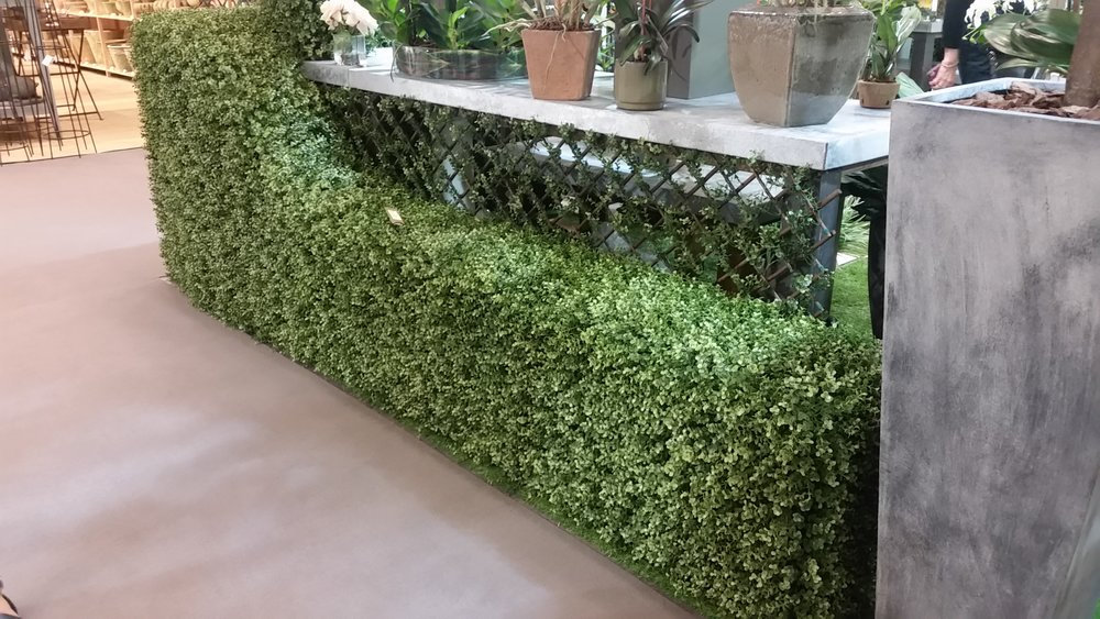 Shaped Boxwood hedge