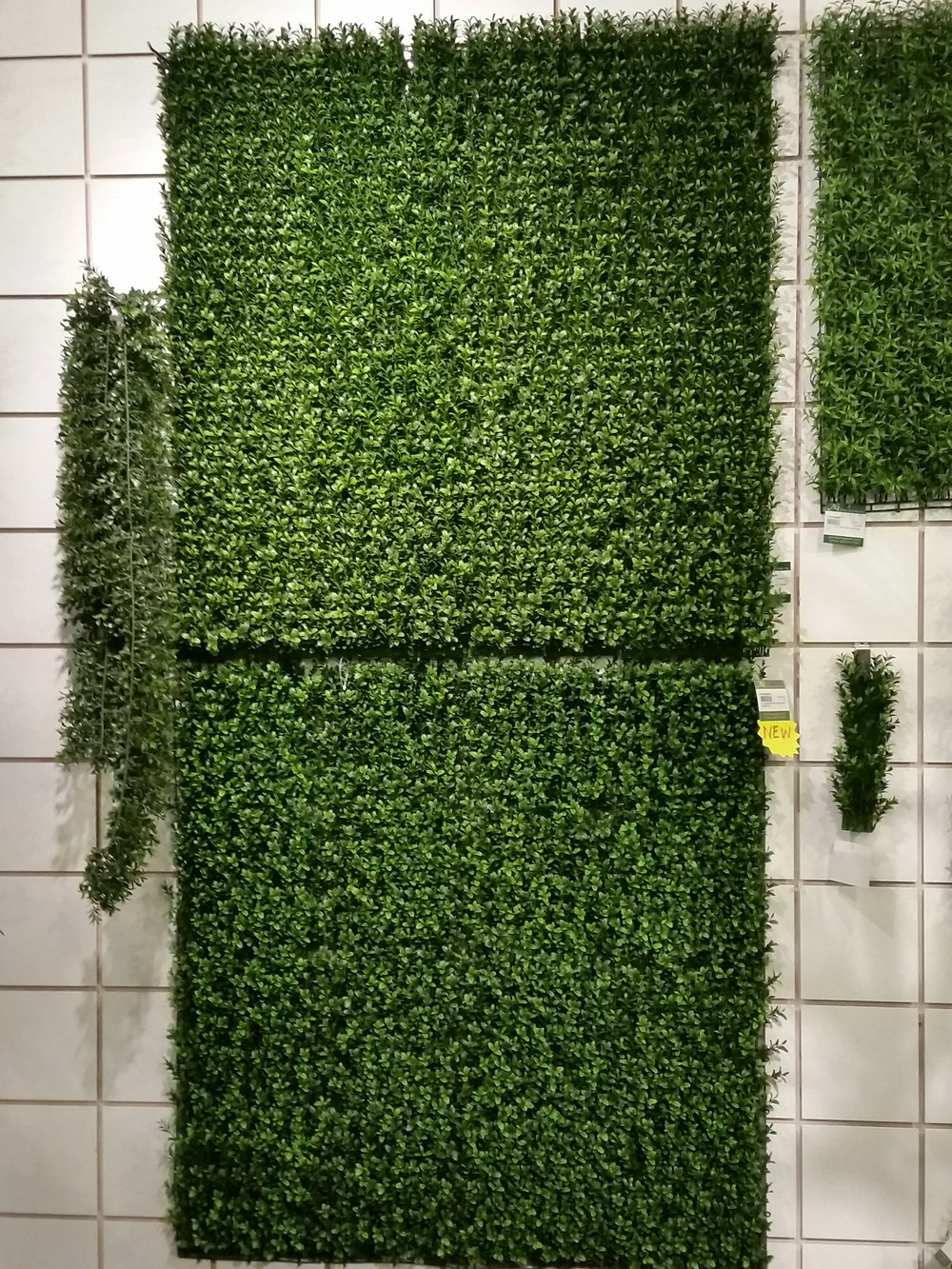 Giant Boxwood mat