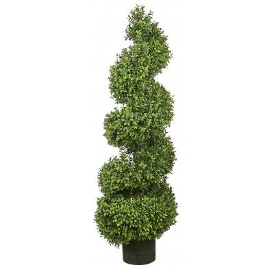 Bushy Boxwood Spiral