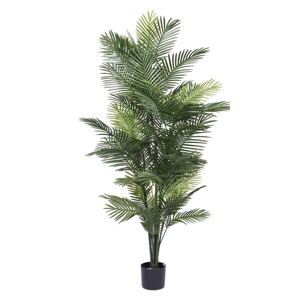 PL577 Areca Palm