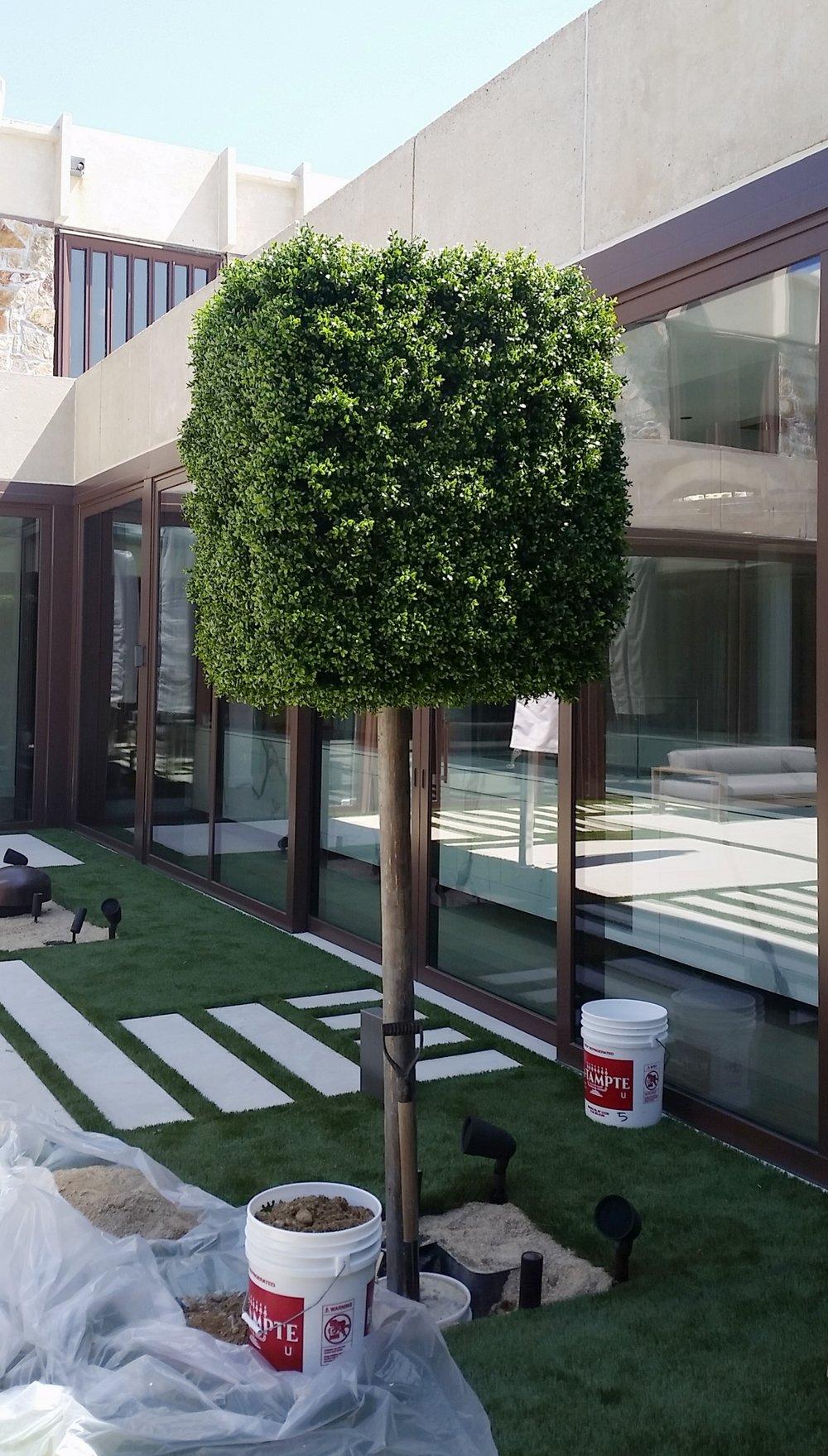 Boxwood Square Topiary