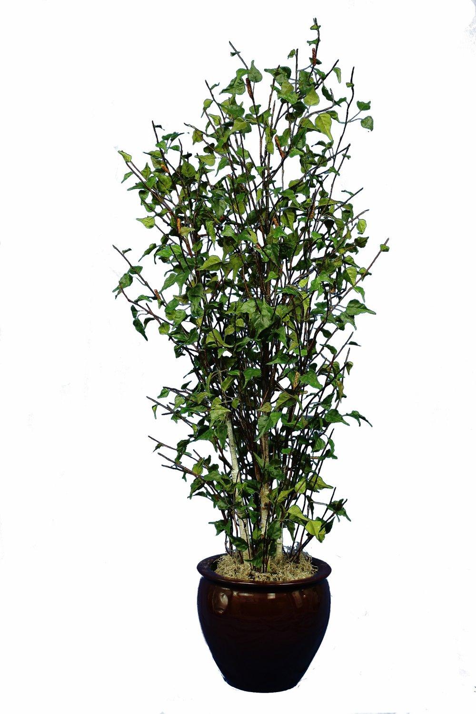 TPT 1917- Birch tree