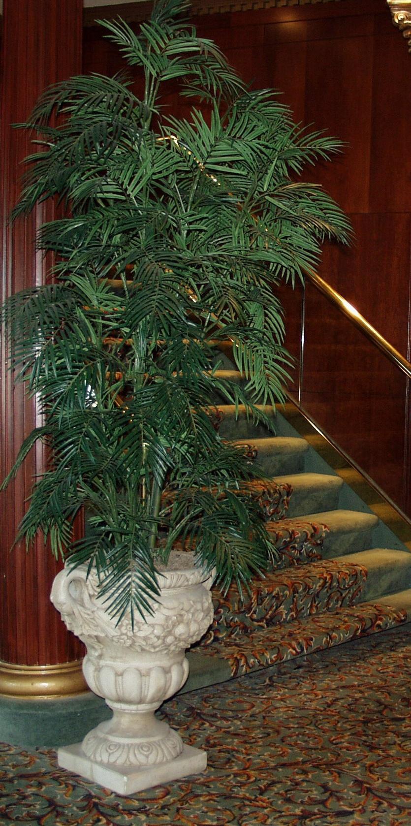 PL181 Areca Palm