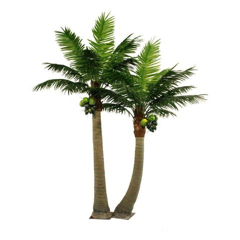 PG501 Coco Palm