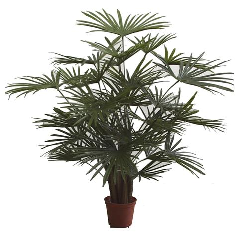 PL529 Finger Leaf Palm
