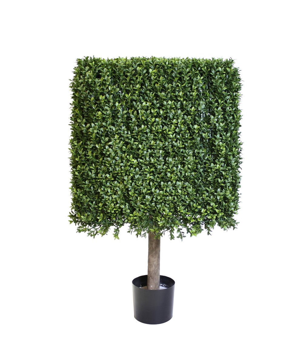 Square Boxwood hedge