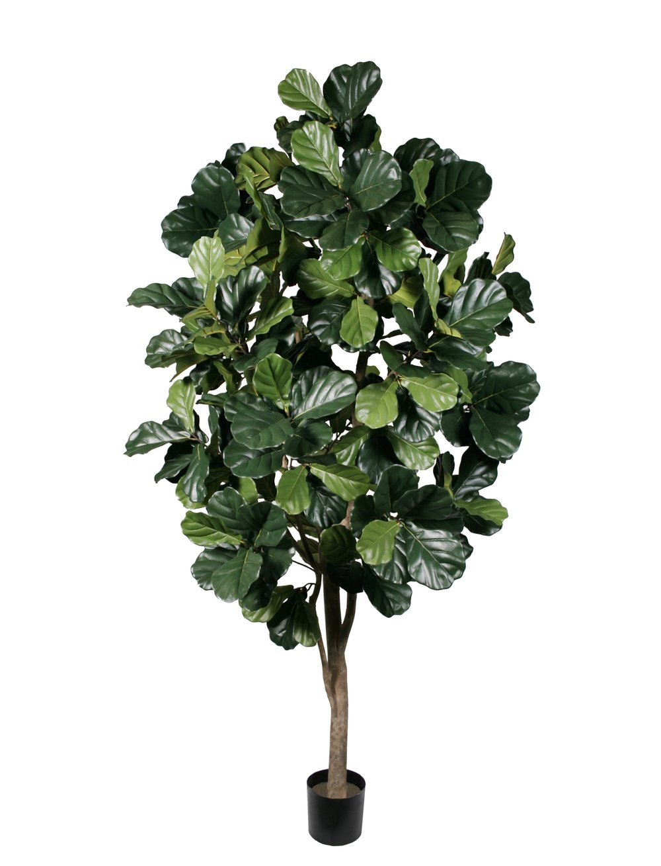 TSP 1679- Fiddle Leaf tree