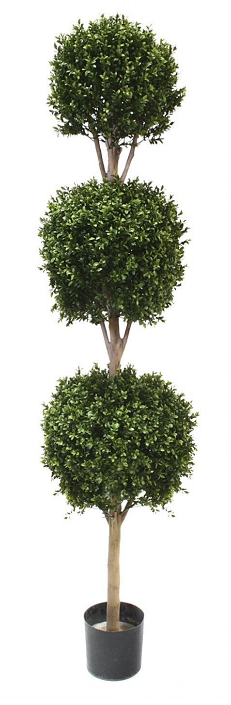Boxwood Triple Ball Topiary