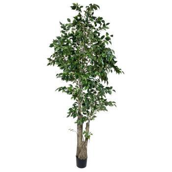 TSP 1766- Ficus