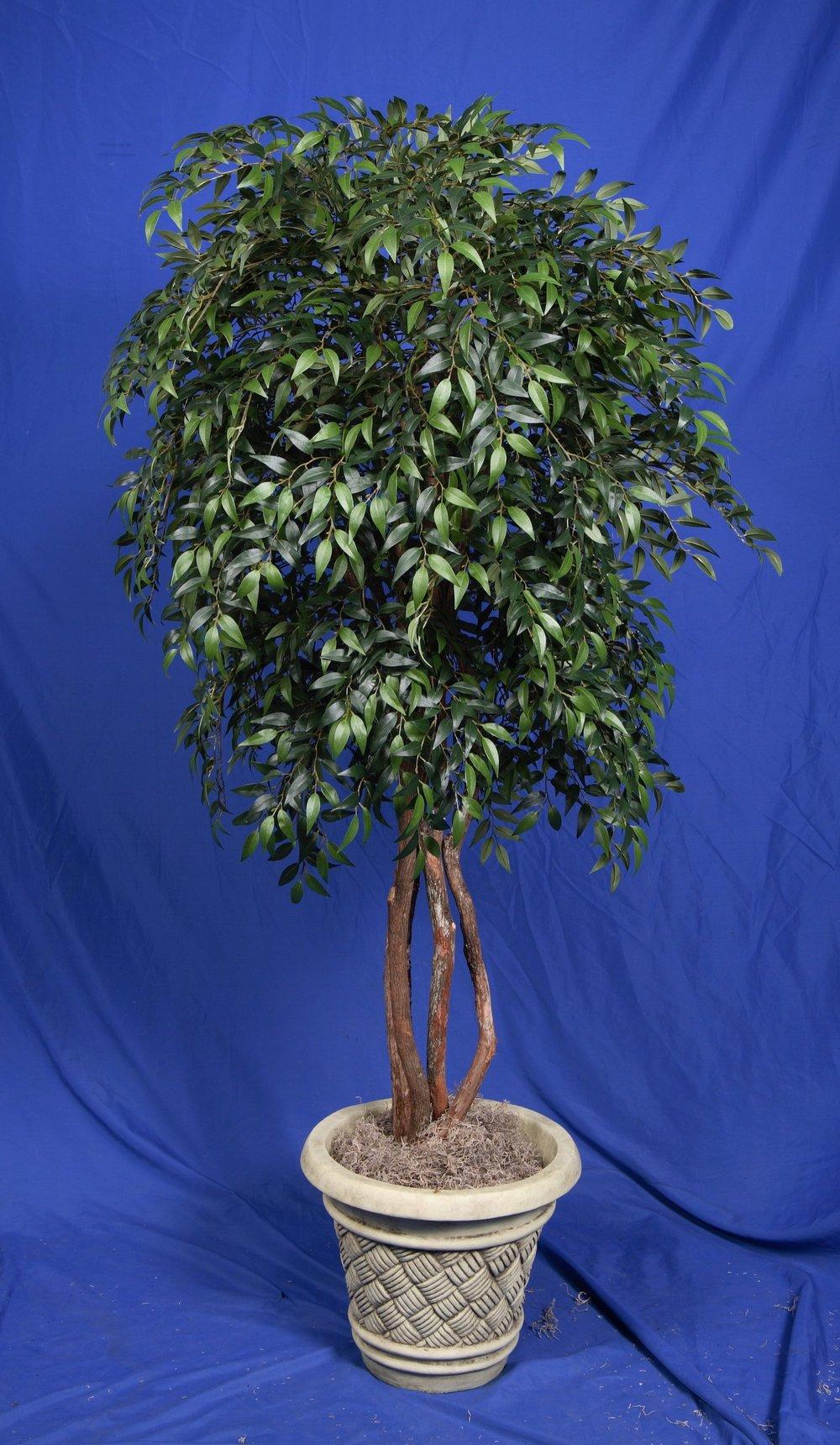 TPT 4904- Smilax Tree