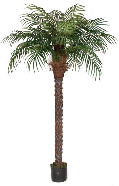8ft Date palm.jpg