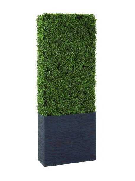 Boxwood Hedge in planter