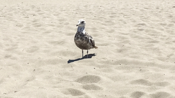 Life With Michele Renee Stinson Beach Seagull