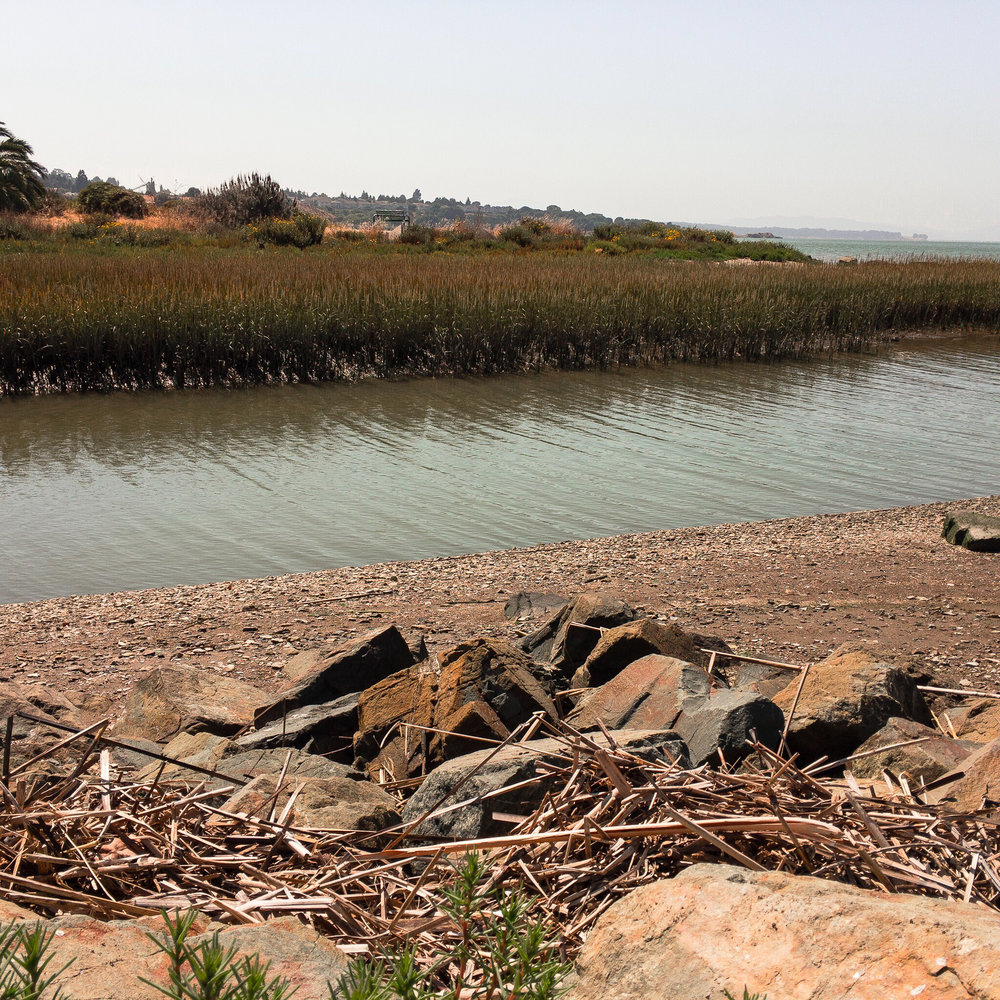 The Pinole Shoreline . I have a huge passion for nature and simple landscape shots like this.