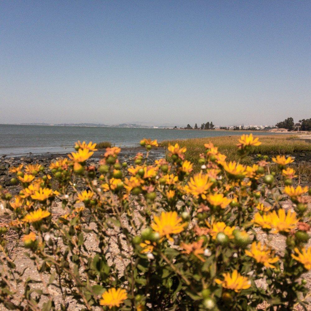 shore-flowers.JPG