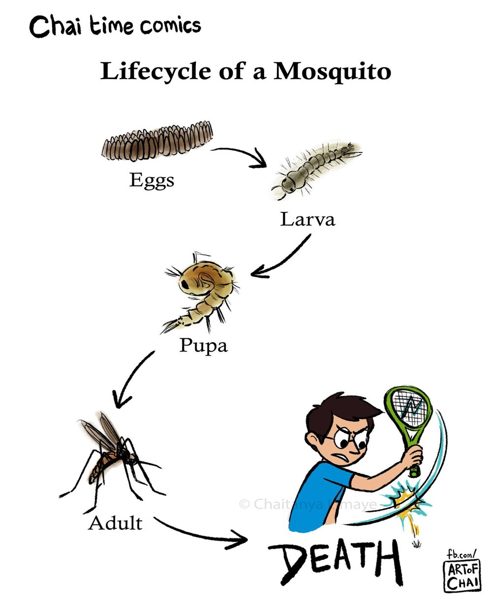 'Bye-ology of a Mosquito.'