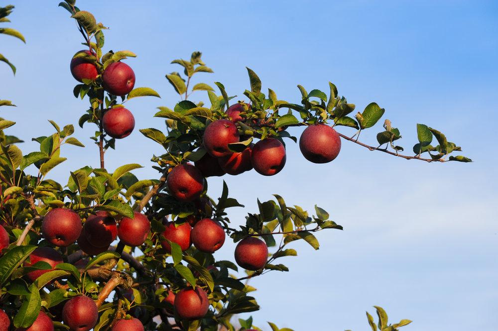 Fall foliage-054.jpg