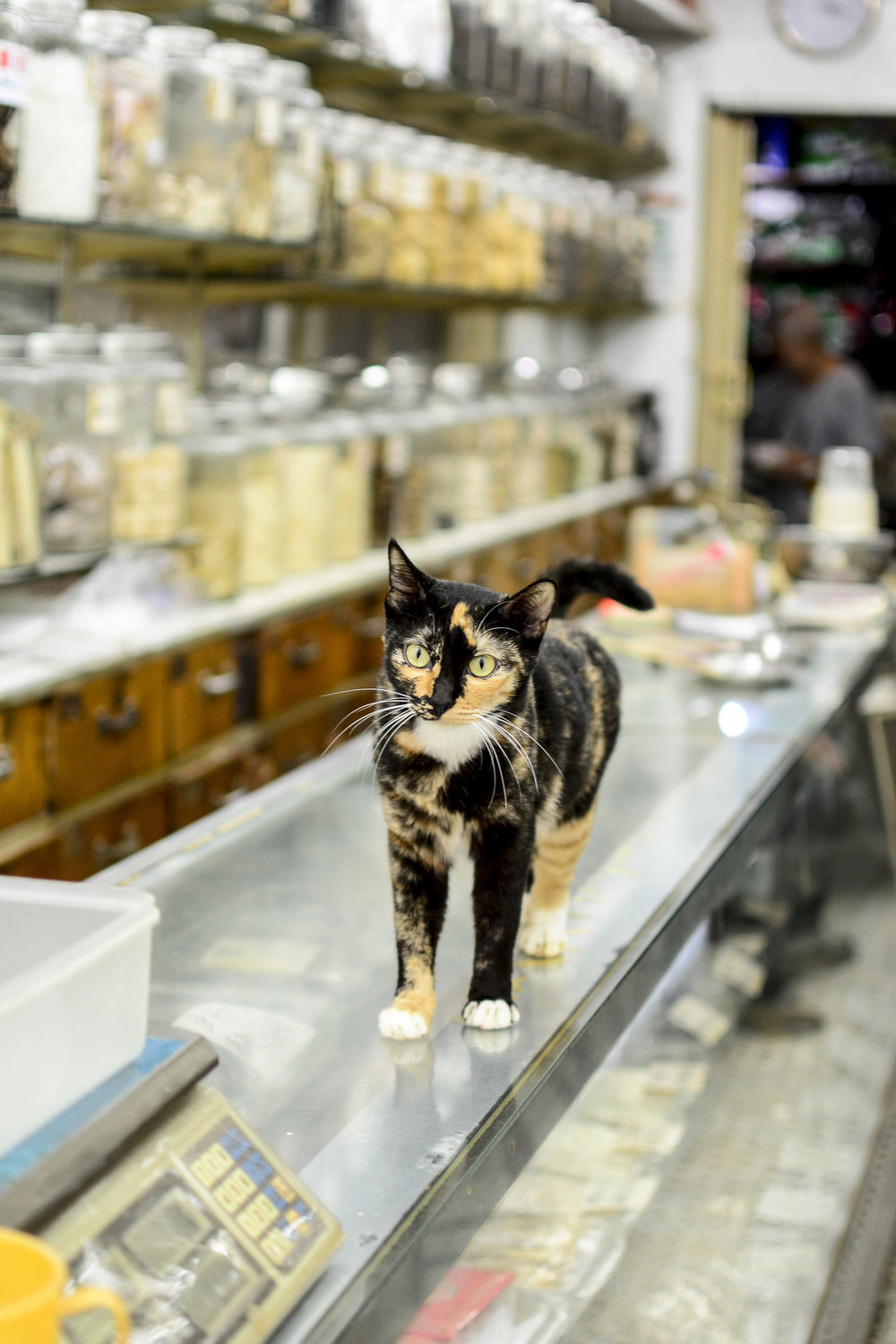 Cat in traditional Chinese Apothecary on Canton Road (2018). As of today, my favorite cat image taken during a Hong Kong Photo Tour/Lesson.