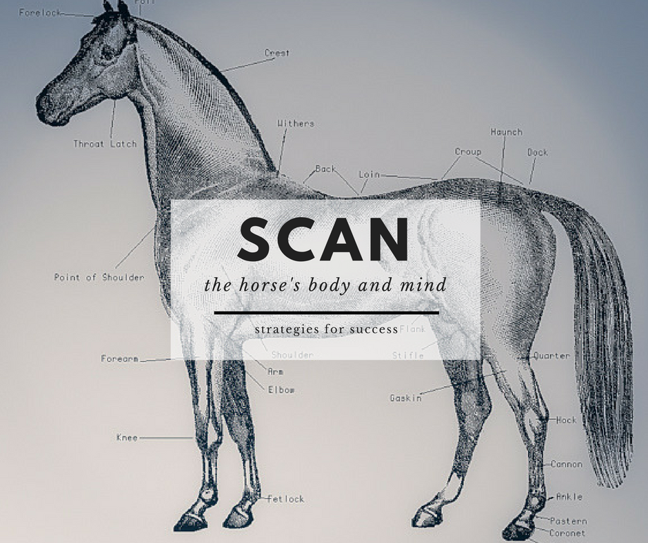 1. - Scan the horse's body and mind for specific problems and address them.