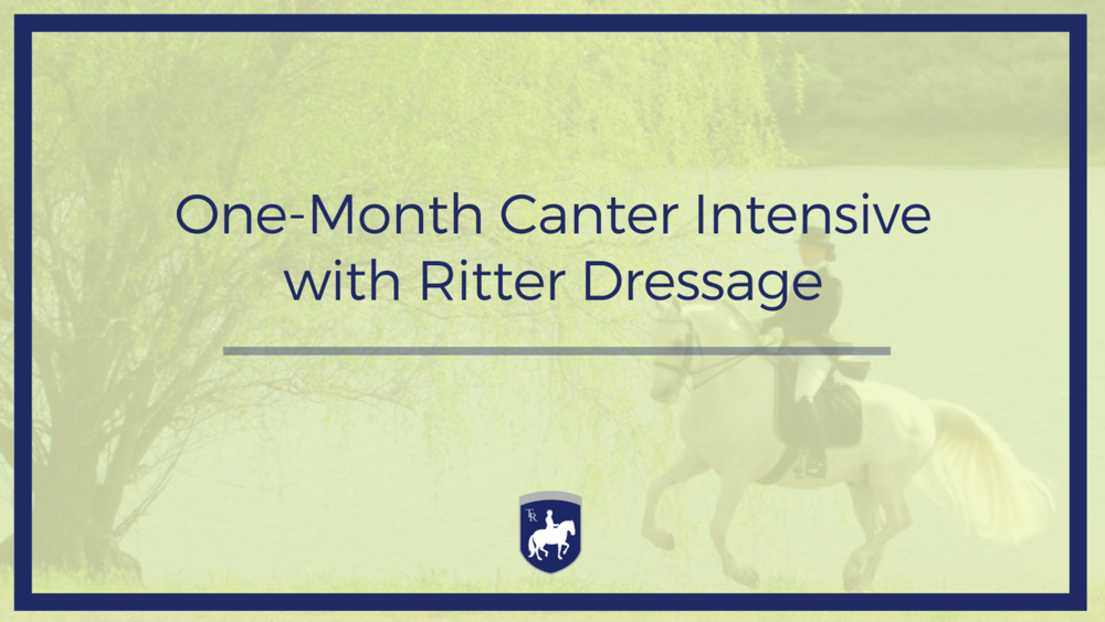 canter online course
