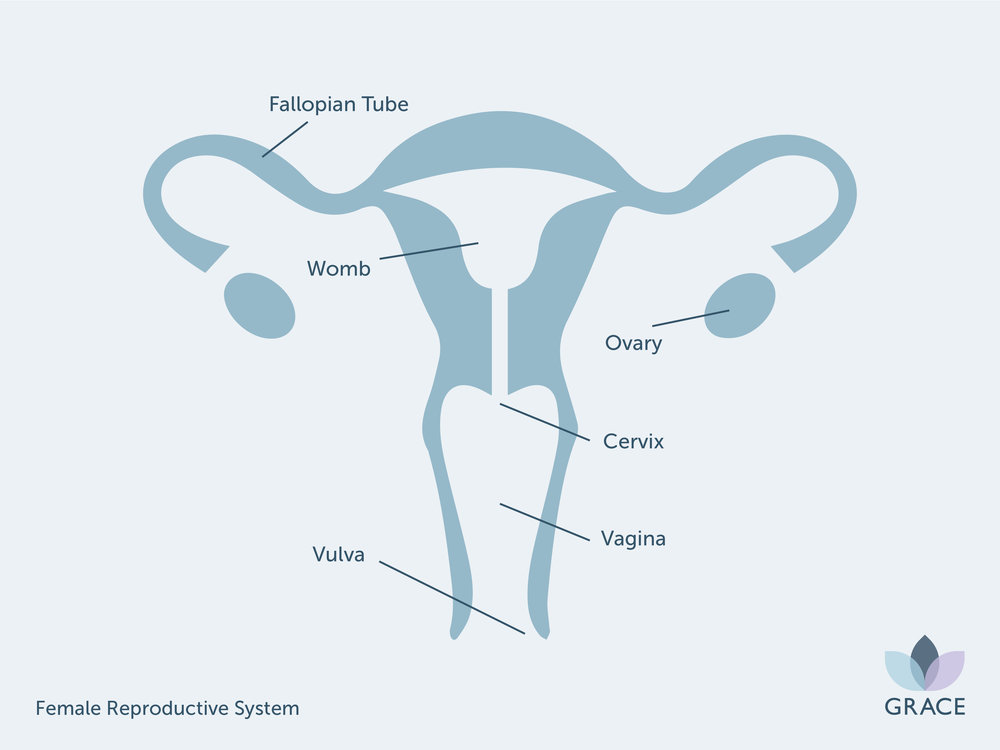 GR - Female Reproductive System.jpg