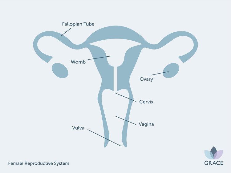 GR+-+Female+Reproductive+System.jpg