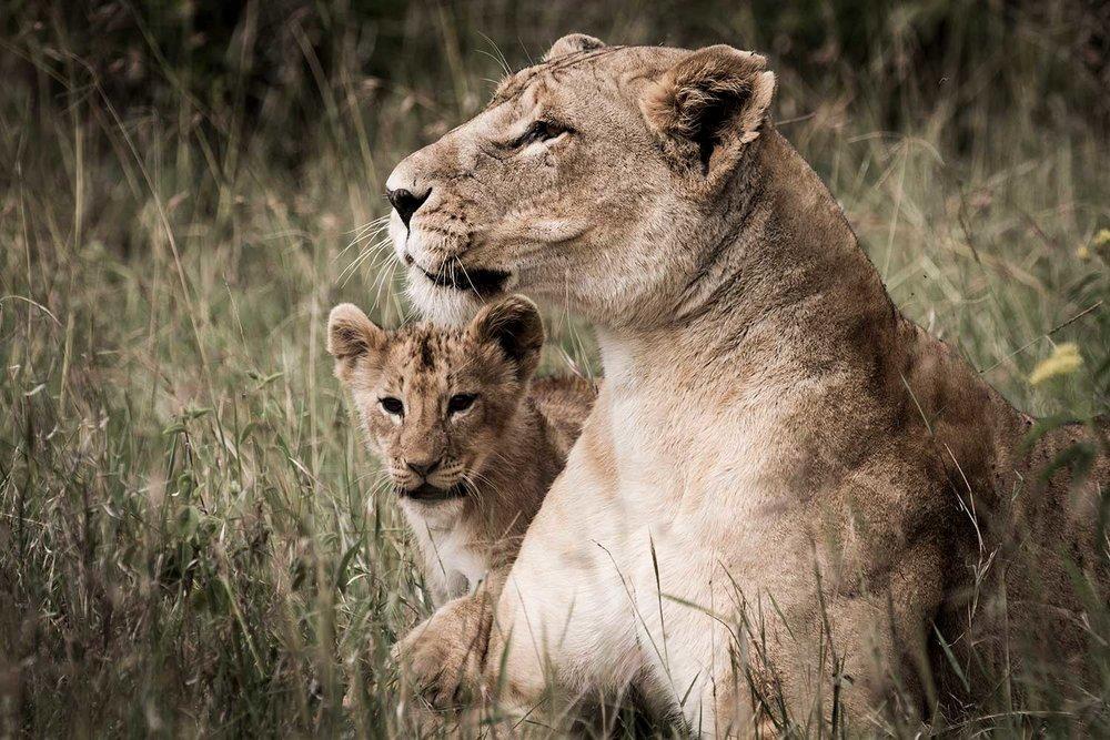 EXPOSE_TRAVEL_I-LOVE-AFRICA_17.jpg