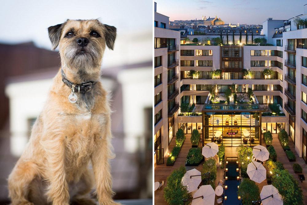LB-BLOG_BEST-SIX-HOTELS-WITH-PETS_12.jpg