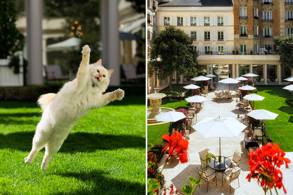 LB-BLOG_BEST-SIX-HOTELS-WITH-PETS_11.jpg