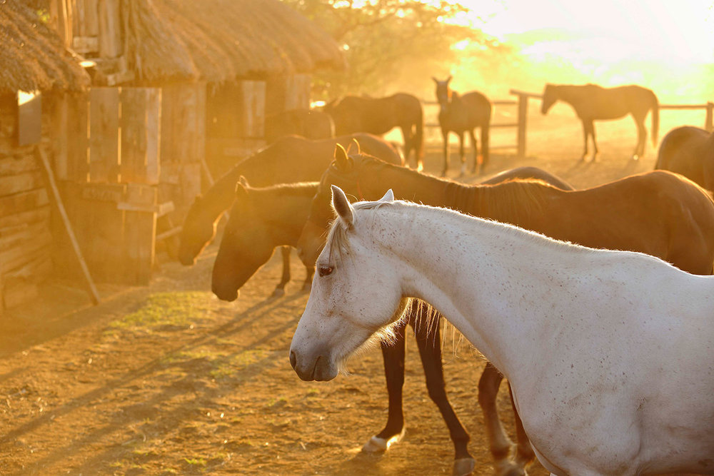 LB-BLOG_AMAZING-AFRICA-–-A-DESTINATION-FOR-ALL-AGES_26.jpg
