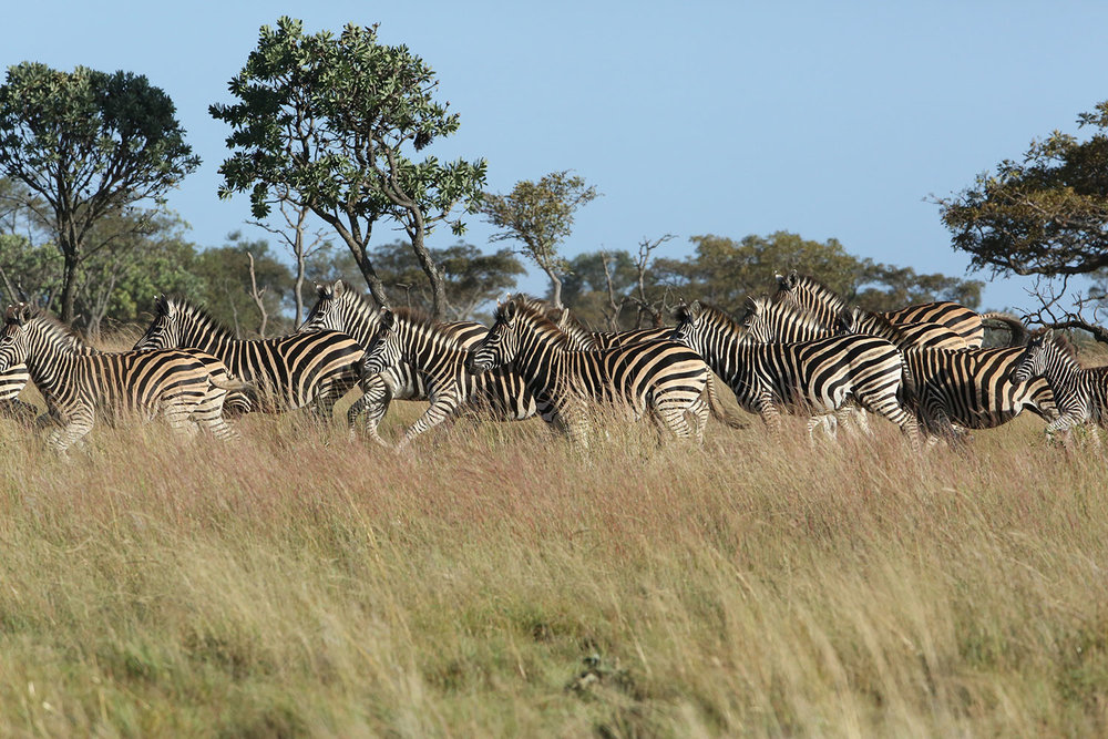 LB-BLOG_AMAZING-AFRICA-–-A-DESTINATION-FOR-ALL-AGES_12.jpg