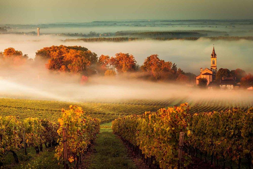 Sunset landscape Bordeaux wineyard