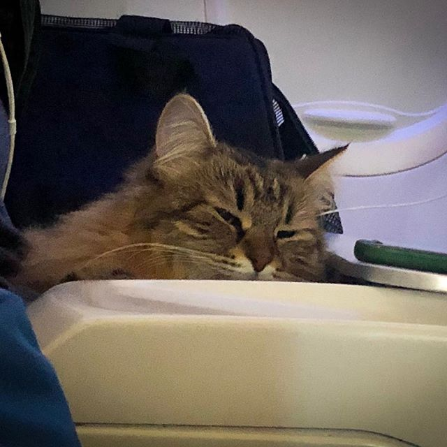 Cutest kitty ever on a flight to NYC.